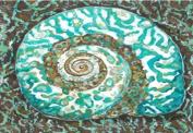 My Island Canvas Mat, Turban Shell