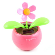 Beautylife Solar Powered Dancing Flower Assorted