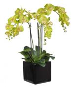 House of Silk Flowers Artificial Triple-Stem Phalaenopsis Orchid Arrangement, Lime Green