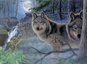 Paint By Number Kit 39cm x 29cm -Mystical Moonlight