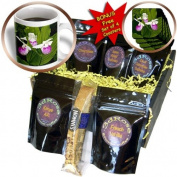 cgb_92113_1 Danita Delimont - Flowers - MN, Itasca SP, Showy Lady-Slipper flower - US27 PHA0000 - Peter Hawkins - Coffee Gift Baskets - Coffee Gift Basket