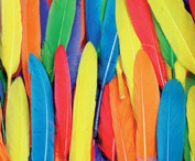 Duck Quill Feathers - Bright Colour Assortments