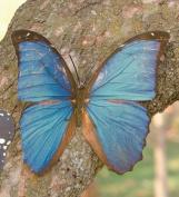Tropical Butterfly Metal Wall Art, in Blue Butterfly