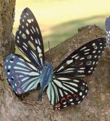 Tropical Butterfly Metal Wall Art, in Black Butterfly