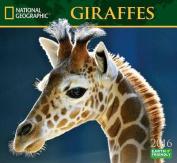 Giraffes Calendar
