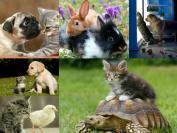 """ANIMAL FRIENDSHIP-POSTCARDS"""