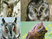 """OWL-POSTCARDS"""