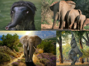 """ELEPHANT-POSTCARDS"""