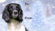 English Springer Spaniel Dog No. 2. Christmas Labels (42) - Self Adhesive