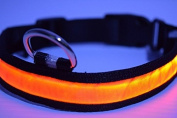 3 Mode LED Light up Dog/cat/pet Collars