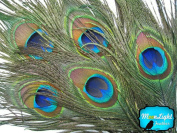 Peacock Feathers ; Big Natural Peacock Tail Eye Feathers; 10 Pieces Per Pack