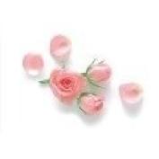 Rose Petals Premium Fragrance Oil, 470ml Bottle