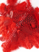 Approx 200, Guinea Plumage Feathers, Many colours to choose from, spotted, per 30ml bag, by Lamplight Feather Inc