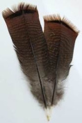 Bronze Pre-tail Turkey feather