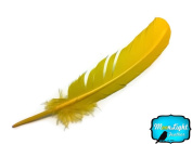 Feathers, Turkey Feathers - Yellow Turkey Rounds Quill Feathers - 6 Pieces
