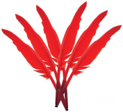 Touch of Nature 38171 Indian Feather, 10 to 30cm , Red