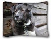 Decorative Standard Pillow Case Animals Dog Black Guard Chain Melancholy Animals 50cm *70cm One Side