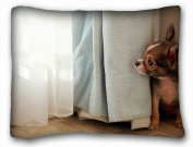 Decorative Standard Pillow Case Animals dog blind window hiding 50cm *70cm One Side