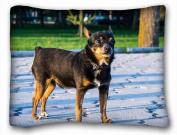 Decorative Standard Pillow Case Animals dog black friend 50cm *70cm One Side