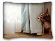 Decorative Standard Pillow Case Animals dog blind peeps 50cm *70cm One Side