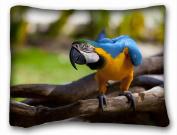Decorative Standard Pillow Case Animals Birds Birds parrots 50cm *70cm One Side