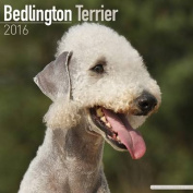 Bedlington Terrier Calendar 2016