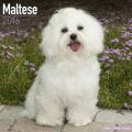 Maltese Calendar 2016