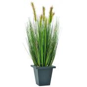 Europalms 60 cm Water Grass in Pot, Green/Brown