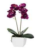 Country Baskets Mini Fuchsia Potted Orchid, Pink