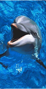 Laughing Dolphin Terry Velour Beach/Bath Towel
