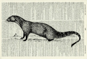 Mongoose ART PRINT - GIFT - Animal ART PRINT - VICTORIAN ART PRINT - Wildlife - VINTAGE ART - - Illustration - Picture - Vintage Dictionary Art Print - Wall Hanging - Home Décor - Housewares -Book Print 66D