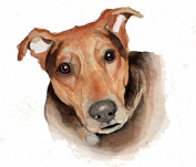 Animal Picture Print,Brown Dog Wall Art And Home Decoration,Canvas Art Print On Canvas,Unstretched And Unframed Size:25cm x 36cm