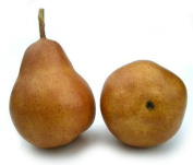 Artificial Brown Bartlet Pear - 1 Single