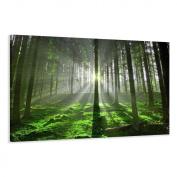 "Visario 5130 Canvas Picture 120 x 80 cm ""Forest"""
