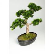 "Artificial Japanese Bonsai Pine in planter, 320 twigs, 16"" / 40 cm - Plastic Bonsai / Artificial Tree - artplants"