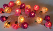 Old English Pink Mixed Colour Rose Fairy Light String