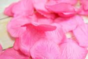 Fuchsia / Hot Pink Silk Rose Petals Confetti for Weddings in Bulk by PaperLanternStore