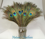 Leegoal 50pcs Natural Peacock Feathers About 10-30cm
