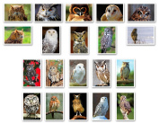 OWLS postcard set of 20. Made in USA. Post cards variety pack.