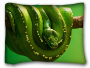 Decorative Standard Pillow Case Animals Green skunk on a branch 50cm *70cm One Side