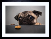 23cm x 18cm ANIMAL PHOTOGRAPHY PORTRAIT PUG DOG TREAT FOOD EYES CUTE FRAMED WALL ART PRINT PICTURE PAINTING WOODEN PHOTO FRAME BLACK WHITE OAK BROWN F97X185