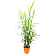 Europalms Field Grass, Green