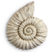 Beige Coloured Resin Nautilus Shell Wall Hanging Home Decor