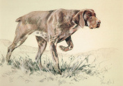Short Haired German Pointer Print, Short Haired German Pointer Picture, Limited Edition Short Haired German Pointer Print By David Thompson DT12