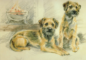 Border Terrier Print, Border Terrier Picture, Limited Edition Border Terrier Print By David Thompson DT29
