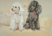Poodle Print, Poodle Picture, Limited Edition Poodle Print By David Thompson DT22