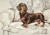 Short Haired Dachshund Print, Short Haired Dachshund Picture, Limited Edition Short Haired Dachshund Print By David Thompson DT15
