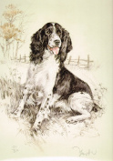 Springer Spaniel Print, Springer Spaniel Picture, Limited Edition Springer Spaniel Print By David Thompson DT5