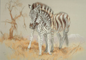 Zebra Print, Zebra Picture, Limited Edition Zebra Print By David Thompson DT21