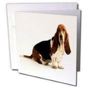 3dRose Greeting Cards, 15cm x 15cm , Pack of 12, Handsome Basset Hound